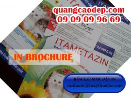 In brochure nhanh rẻ đẹp, in offset chất lượng cao